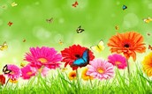 Unit 8-Wonders of Nature: Plants and Animals