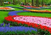 Tuplip Gardens