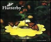 Butterfly Flutterby Art Contest Winners
