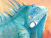 (this is a real iguana it was bred that way