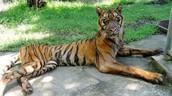 ★The Surabaya Zoo in Indonesia☆