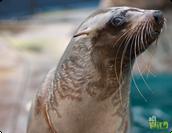 Save Marine Animals