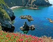 THE NATURE OF CHANNEL ISLANDS NATIONAL PARK