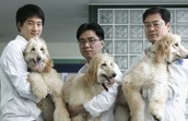 Lab in South korea