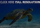¿dode vive la tortuga?