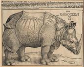 Durers Rhinoceros