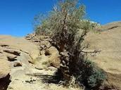Things in the Sahara Desert