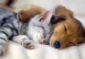 Have a furry friend?  No problem!