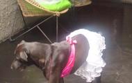 My Dog <3 :)