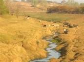Lavaca river