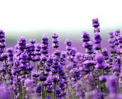 Young Living Essential Oils Update from 2014 Convention