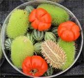 """Strange """"Fruits"""""""