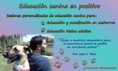 Sesiones de educación canina en positivo