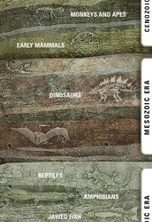 Fossil layers