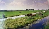 Laagland in west-Nederland