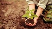 Plantio de Mudas e incentivo à Projetos Sustentáveis