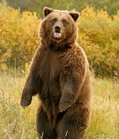 A bear Brian has an encounter with