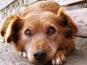 dog gate keeper