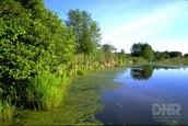 conservation wetlands