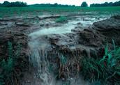 Agriculture runoff.