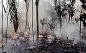 Losing natural habitats because of humans
