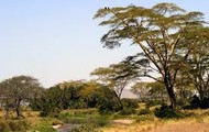 The savanna in Dar es Salaam