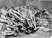 Piles of jewish prisoners dead bodies