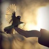 #2 Setting a bird free