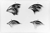 1.Variation Among Individuals Within Species.