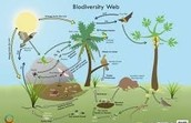 Biodiversity web