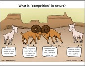 3. COMPETITION