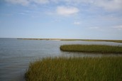 Wetlands in Galvestan Bay