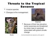 Facts of tropical savanna