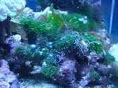 ¿Las algas son beneficiosas o perjudiciales?