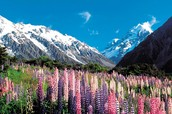 Spring in New Zealand
