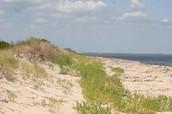 Florida Sand Dune