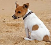A PUP SITTING IN THE SAND ON THE BEACH
