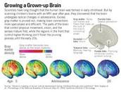 Growing a Grown-up Brain