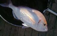 grande pesca!