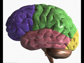 Teenagers use different areas of their brain to perceive emotion