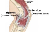 What body system does tendinitis affect?