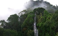 The Jungle of Temburong