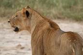 Go Kenya Safari