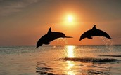 Where do dolphins live? What is their habitat?