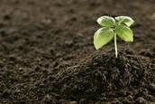 Fertile soil
