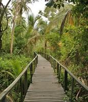 el parque nacional: cahuita national park