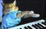 Keyboard Kittens