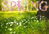 Spring Day Schedule