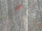 Our State Bird