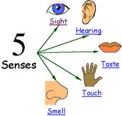 Key Idea: As scientists seek to understand the natural world they use skills such as observing,inferring, and predicting.